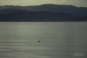 Alaska 2016 00365