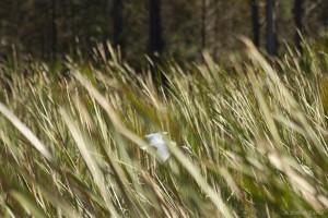 birdinthegrass